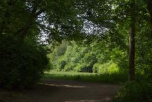Bild: Stadtpark Pasing
