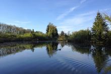 Bild: Der See im Aubinger Moos
