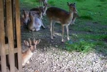 Bild: Wildgehege im Hirschgarten