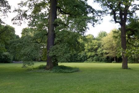 Lauschiges Plätzchen unter Bäumen