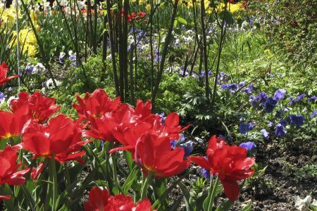 Überall Blumen in schönsten Farben