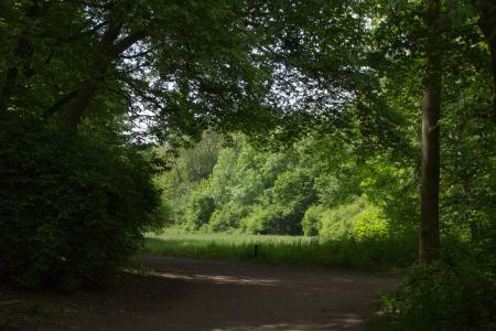 Stadtpark Pasing