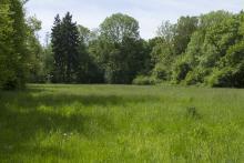 Bild: Der Südpark