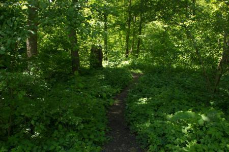 Perfect Trails