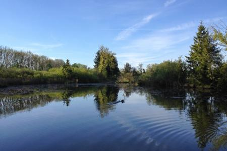Der See im Aubinger Moos