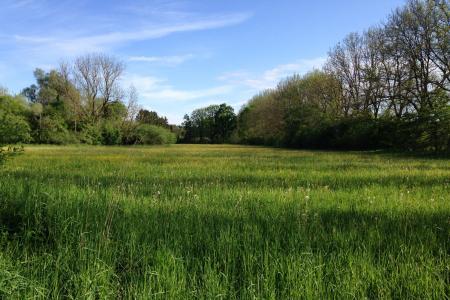 Bavarian meadows