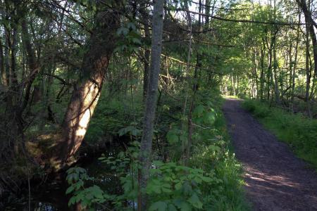 Romantic Trails