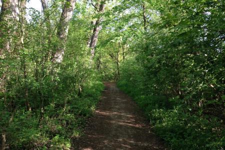 Soft trails