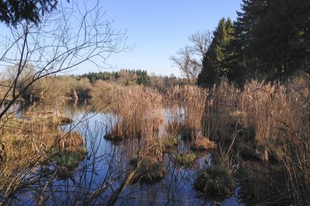 The lake in spring